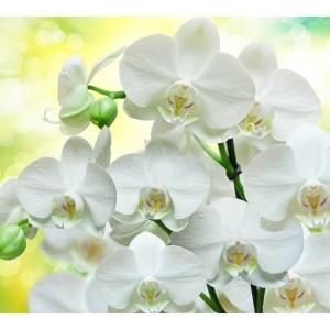 Аэрозоль Awake (идея Kenzo Flowers) Spring Air