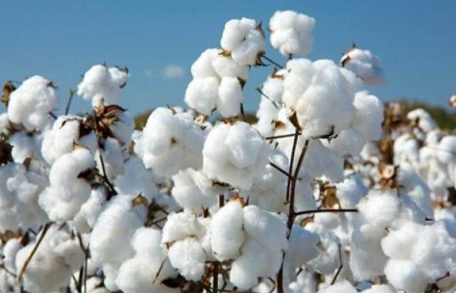 Аэрозоль Cotton - Коттон