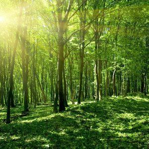 Аэрозоль Green Forest - Зеленый лес