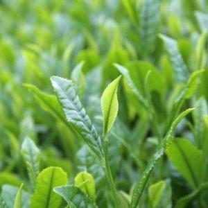 Аэрозоль Green Tea - Зеленый чай