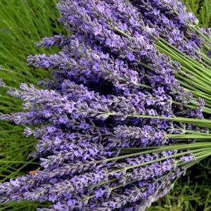 Аэрозоль Lavender - Лаванда