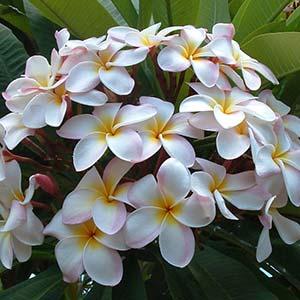 Аэрозоль White Flower - Белые цветы